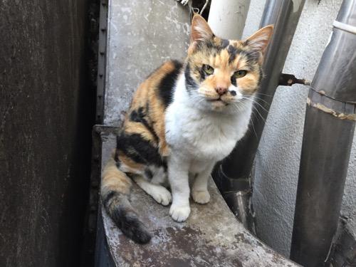 ボイラーで暖をとる猫-新橋駅近くの桜田公園にて