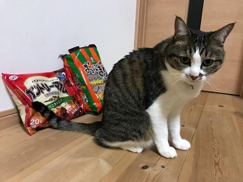 2018年10月の松山地方祭の提灯行列でもらったお菓子をバックにして座る猫-ゆきお