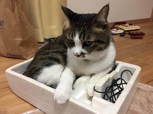 ファミリーコンピュータの発泡スチロールの箱の中から上目遣いで見てくる猫-ゆきお