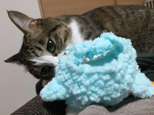 脱ぎ捨てたかわいいかわいいねこひつじ(ブルー)を見つめる猫-ゆきお