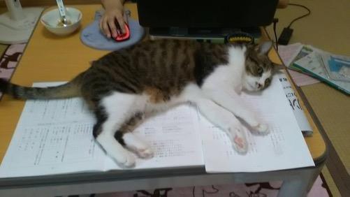 小学5年生の娘の夏休みの宿題の上で寝転がる猫-ゆきお