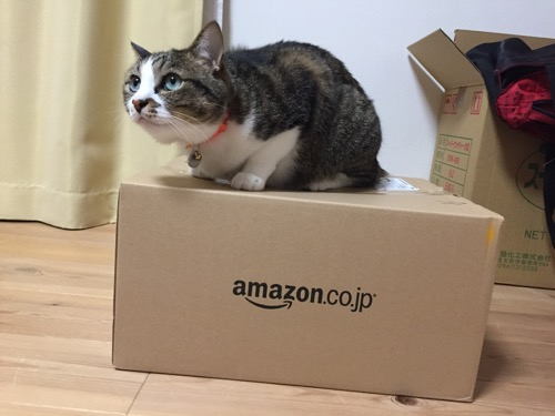 Amazonの箱(XL06)に座る猫-ゆきお