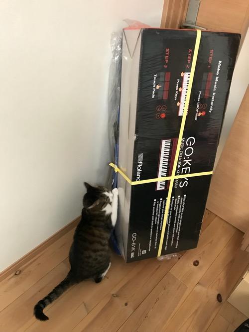 宅配便で届いた直後のRoland GO:KEYS(縦置き)を興味深そうに触る猫-ゆきお