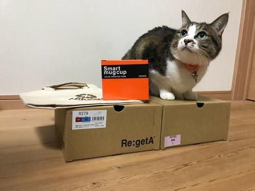 床に置かれたRegettaCanoeの2019年の福袋の中身の箱の上に座って見上げる猫-ゆきお