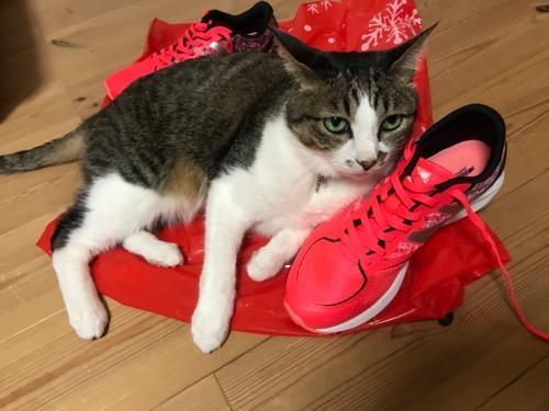 中学一年生の娘の陸上部練習用のニューバランスの赤いシューズに寄り添う猫-ゆきお