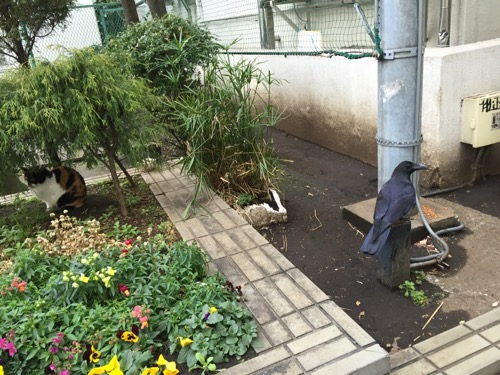 猫とカラスの距離感-桜田公園にて