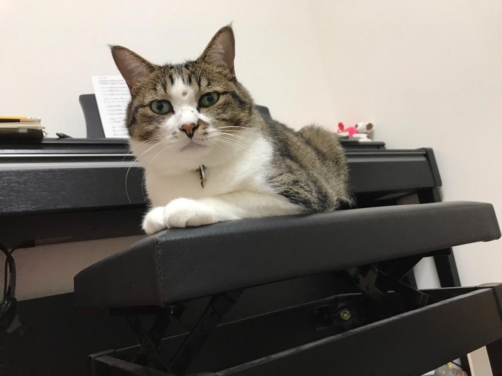 ピアノ用の椅子に座るふてぶてしい顔の猫-ゆきお