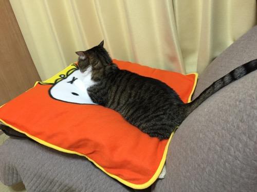 ローソンのミッフィーあったかブランケットを敷いた座布団の上に座る猫-ゆきお