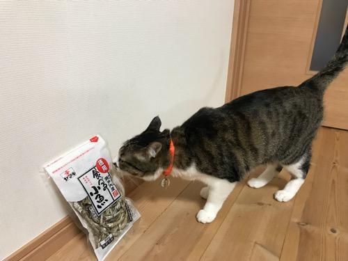 「ヤマキ 徳用 原料原産地 瀬戸内産 酸化防止剤無添加 食べる小魚 煮干魚類」に鼻を近づける猫-ゆきお
