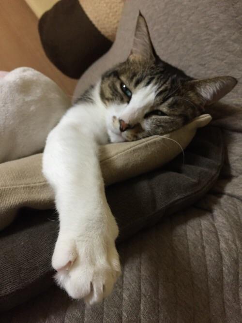 横になって、にゅっと右前足を突き出す猫ーゆきお