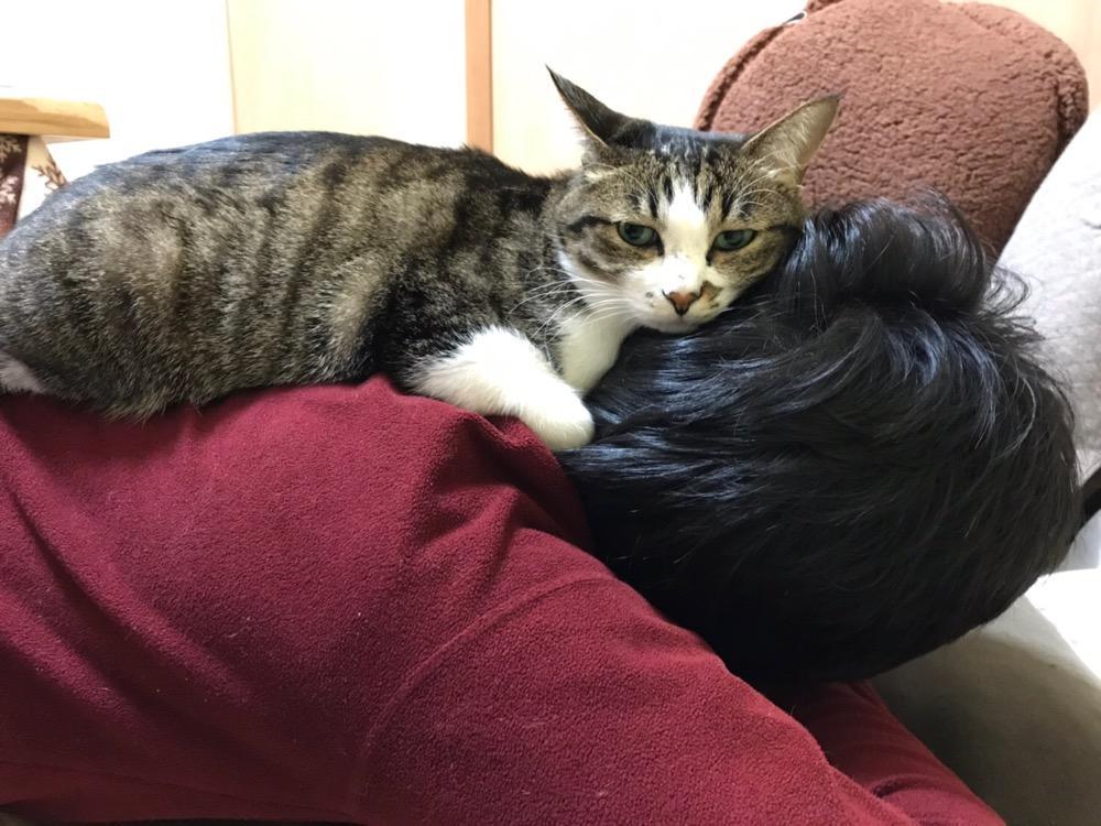 寝息を立てる中年男の背中の上に座る猫-ゆきお(横から見た様子)