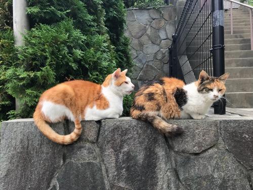 後楽園駅前の公園の猫2匹