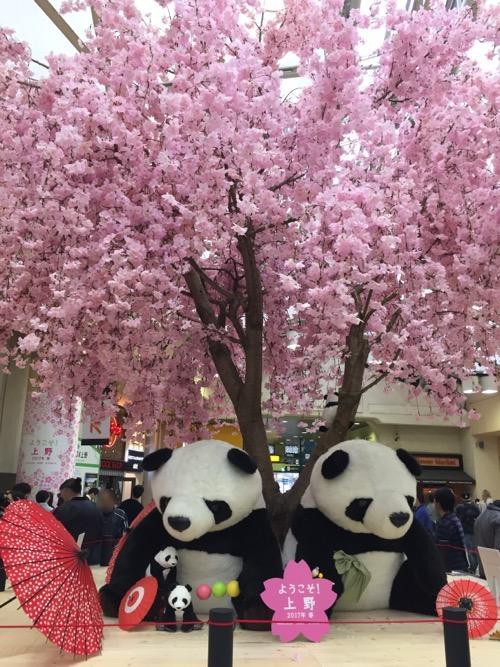 上野駅の桜とパンダ-ようこそ!上野2017年春