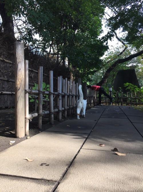 愛宕神社境内にいた白猫ーお尻の穴を見せながら立ち去っていく