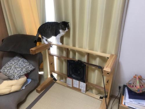 横倒しになったコタツ台の枠の上を歩く猫-ゆきお