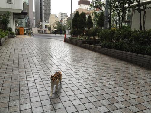 雨降る中、後をついてくる猫-桜田公園にて