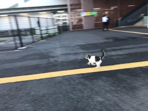 JR袖ケ浦駅前から走って逃げる猫