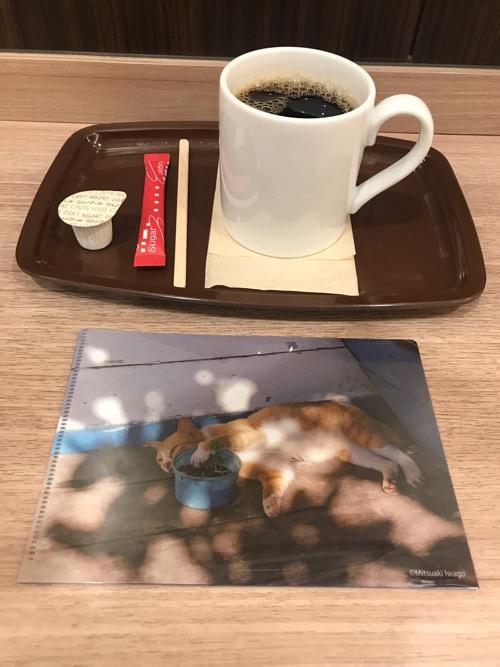 カフェ・ベローチェのブレンドコーヒーMサイズと岩合光昭コラボグッズキャンペーン「季節のねこクリアファイル」(8月の猫・表面)