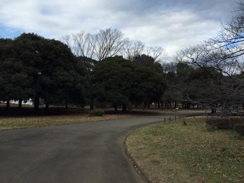代々木公園の入口(南門)付近から眺めた公園内の風景