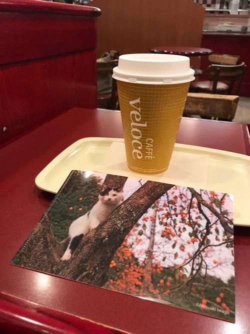 カフェ・ベローチェのブレンドコーヒーLサイズと岩合光昭コラボグッズキャンペーン「季節のねこクリアファイル」(9月の猫・表面)