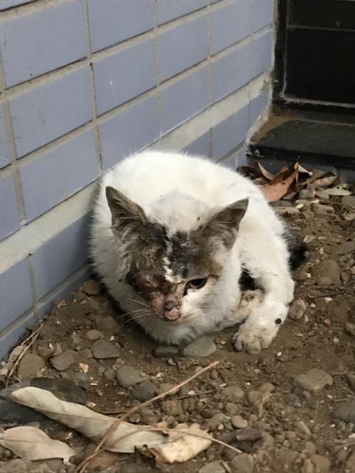 片目の潰れた野良猫 - 東京都葛飾区金町のアパート前にて
