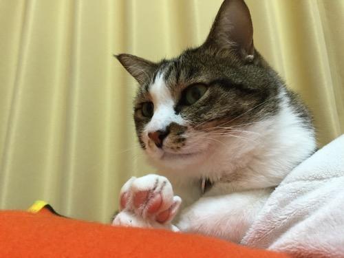 肉球を見せながら目がうつろな猫-ゆきお