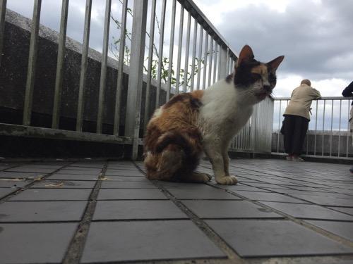 冨士山公園展望台の野良猫
