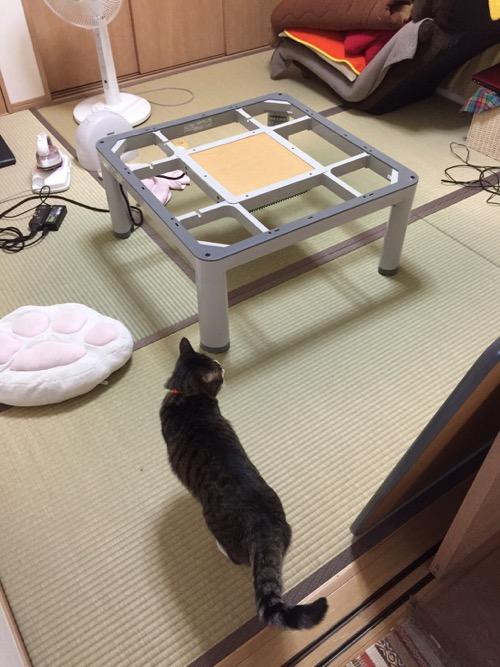 こたつ布団がなくなったこたつに近寄る猫-ゆきお