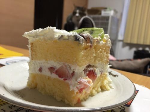 カットされた猫のダヤンの誕生日ケーキの断面と我が家の飼い猫-ゆきお