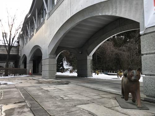 宮城大学キャンパス内を歩く犬