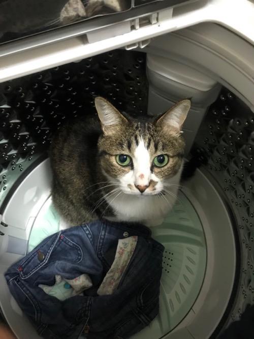 青いジーパンと洗濯機の底から見上げてくる猫-ゆきお
