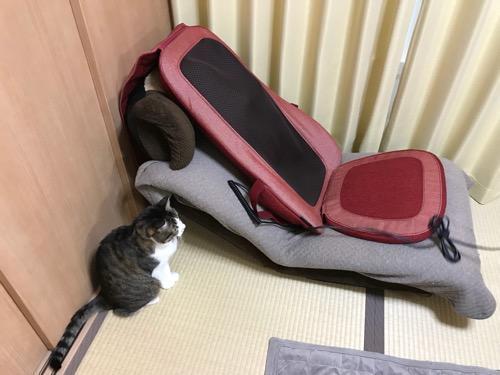 座椅子の上に設置した「TOR マッサージシート タタキもみ AX-HXT218rd レッド」を見つめる猫-ゆきお
