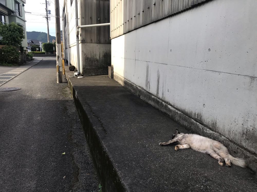 ひっそりと道端の日陰で横たわる野良猫 - 大分県臼杵市(JR臼杵駅から臼杵港までの道端)