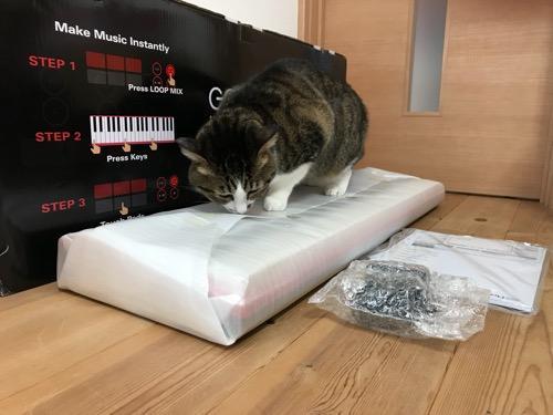 Roland GO:KEYSの未開封のキーボードの上に乗って匂いを嗅ぐ仕草をする猫-ゆきお