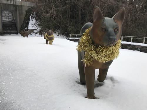 宮城大学キャンパス内の雪原を歩く金色のモールを首に巻いた犬