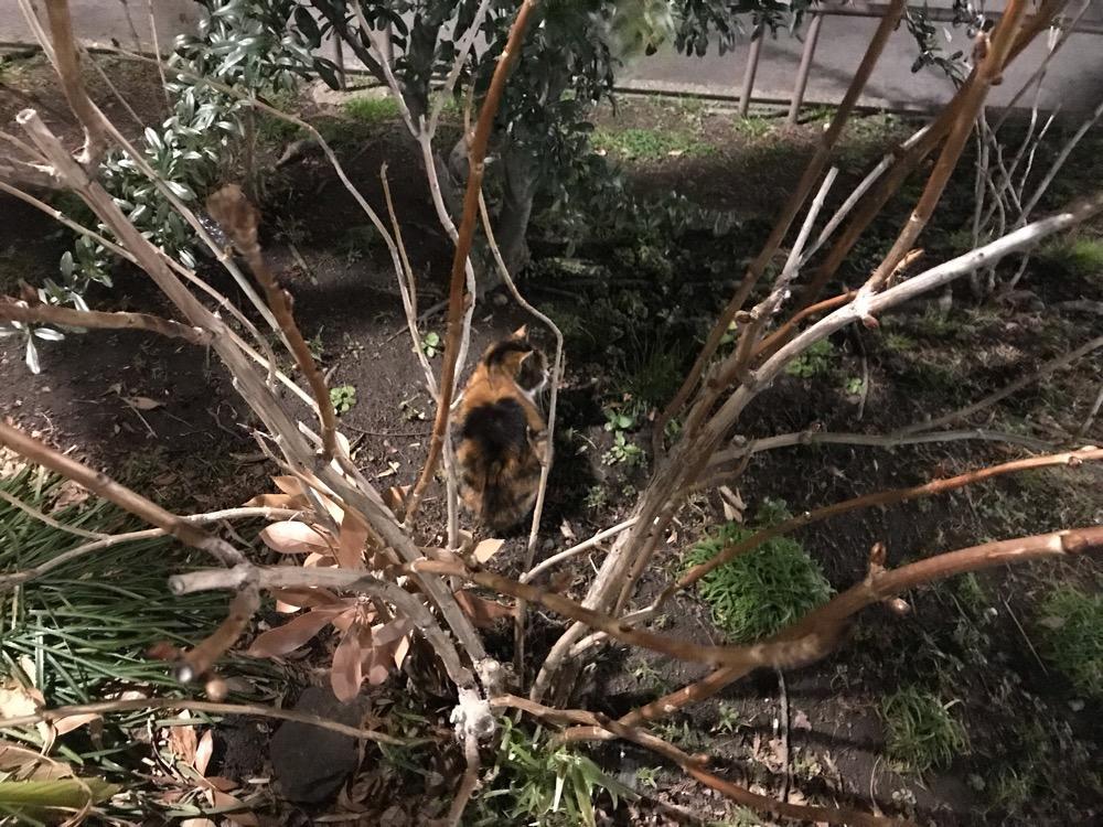 夜の公園の植え込みに座る茶色い野良猫の背中