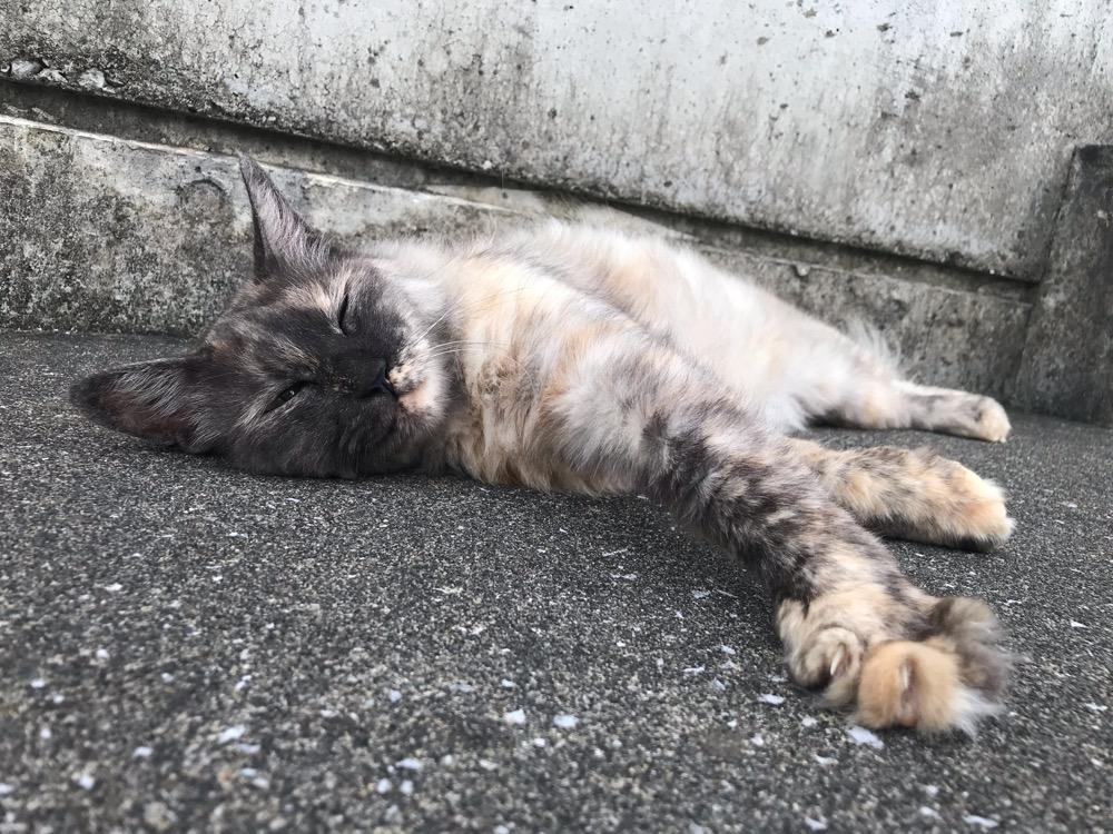 横たわりながらうっとりと目を細める野良猫 - 大分県臼杵市(JR臼杵駅から臼杵港までの道端)
