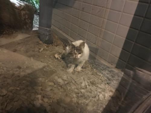 ガラス越しに見つめてくる片目の潰れた猫 - 東京都葛飾区金町のアパート前にて