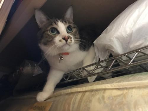 押入れの中で様子をうかがう猫-ゆきお