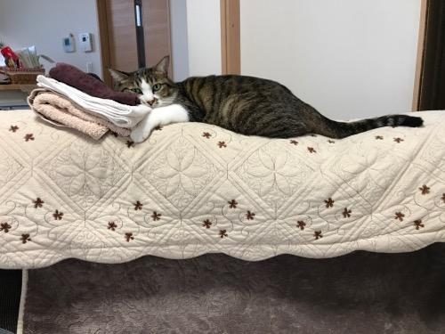 パンツを枕にする猫-ゆきお