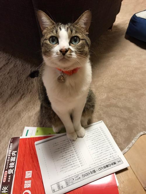 漢検の練習問題に愕然として飼い主を見上げる猫-ゆきお