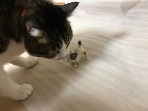 土造窯の砥部焼・ねんころりの猫に鼻タッチする猫-ゆきお