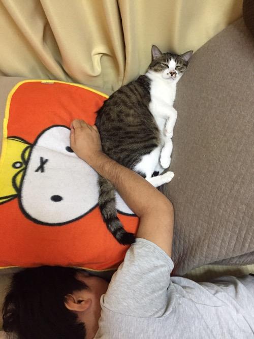飼い主の右腕に背中からお尻をくっつけて眠る猫-ゆきお