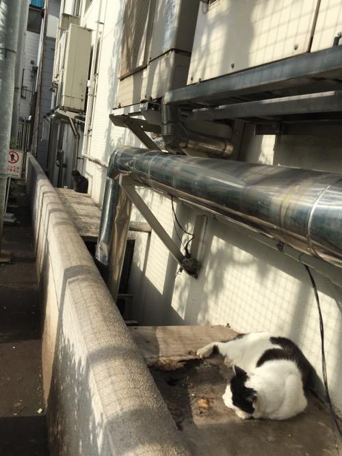 目の前で眠る白猫と遠くで座る黒猫-新橋・桜田公園にて