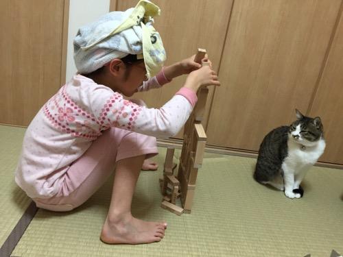 ジェンガを組み立てる娘を冷ややかに見つめる猫-ゆきお