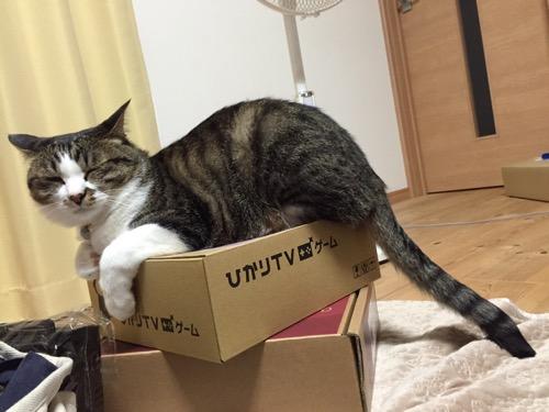 「ひかりTV ゲーム」の段ボール箱の上で眠る猫-ゆきお