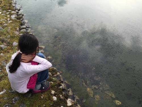 本谷公園の親水広場の池の水辺で泳ぐ大量のおたまじゃくしを眺める10才の娘