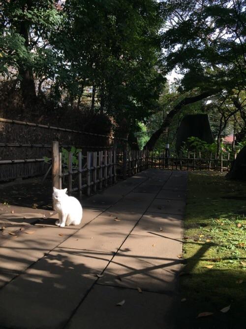 愛宕神社境内にいた白猫ー遠く離れている