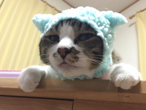 かわいいかわいいねこひつじちゃん第4弾 子ひつじ(ブルー)をかぶる猫-ゆきお