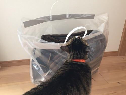 無印良品の2016年の福袋「中身の見える福袋 ファブリック 税込み3000円」に興味津々の猫-ゆきお